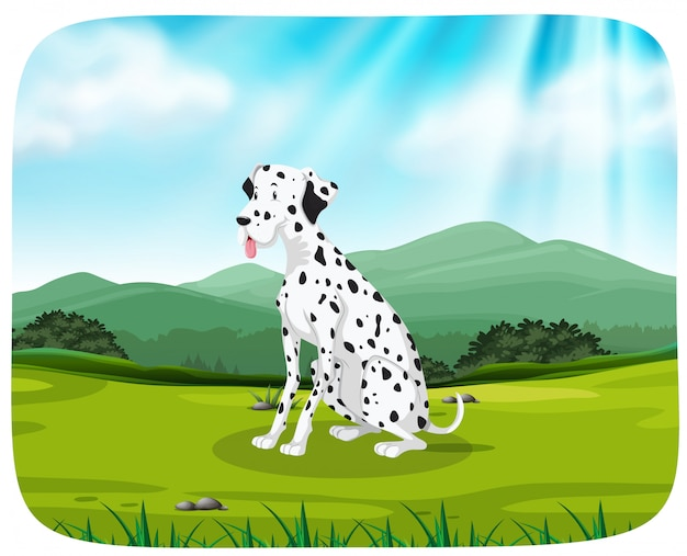 Dalmatien sur la scène de la nature