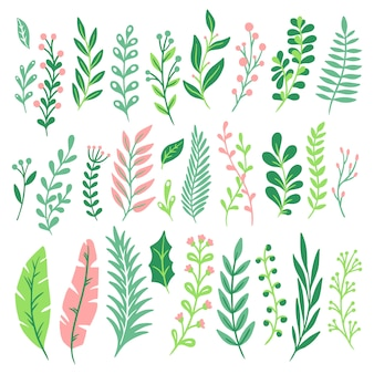 Décor de feuilles. feuille de plante verte, verdure de fougères et feuilles isolées de fougère naturelle florale