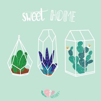 Décor à la maison dans un style scandinave moderne. plantes succulentes, cactus et autres plantes en croissance