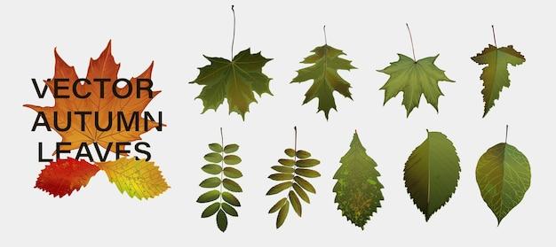 Décor nature d'automne. feuilles d'automne tombant design graphique. fond de vecteur spécifique à la saison d'automne.