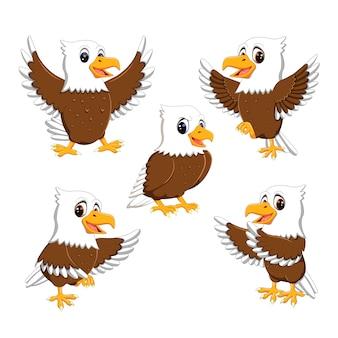 Définir la collection dessin animé d'aigle