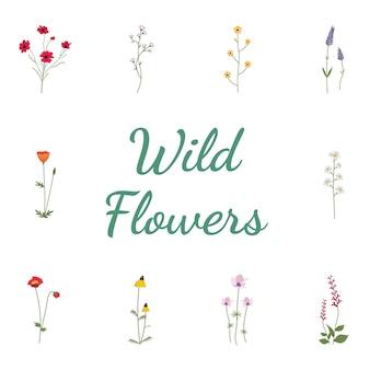 Définir la collection de fleurs sauvages