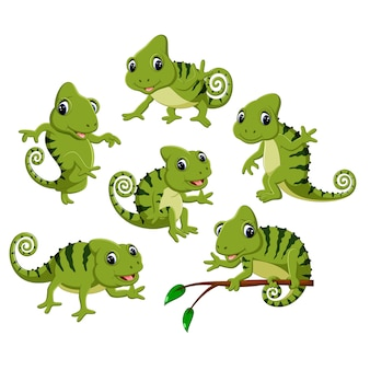 Définir la collection de mignon caméléon