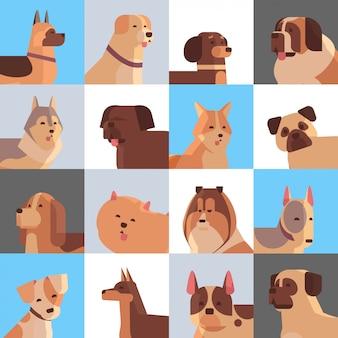 Définir différents chiens de race à fourrure amis humains à la maison animaux de compagnie collection concept dessin animé animaux ensemble portrait