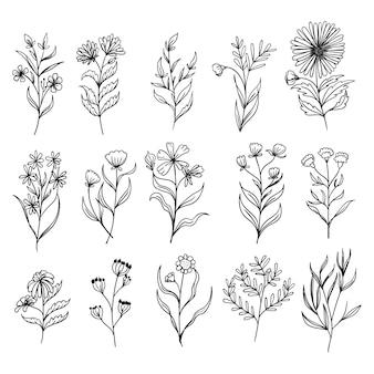 Définir des feuilles botaniques doodle dessin au trait de fleurs sauvages