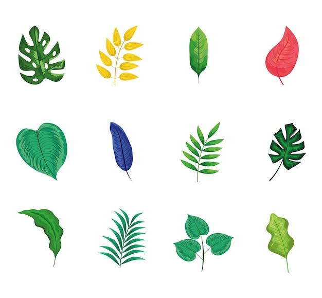 Définir des icônes de la nature de feuilles
