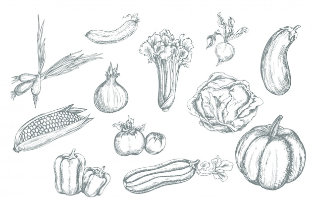 Définir des légumes dessinés à la main.