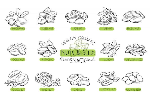 Définir les noix et les graines d'icônes.