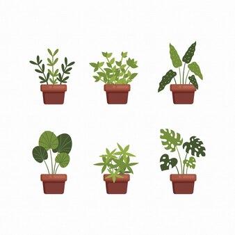 Définir des plantes botaniques à la maison sur des illustrations de collection