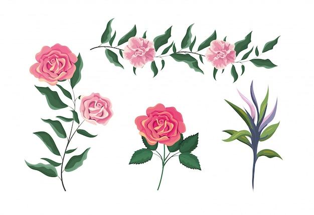 Définir des plantes de roses exotiques avec des feuilles