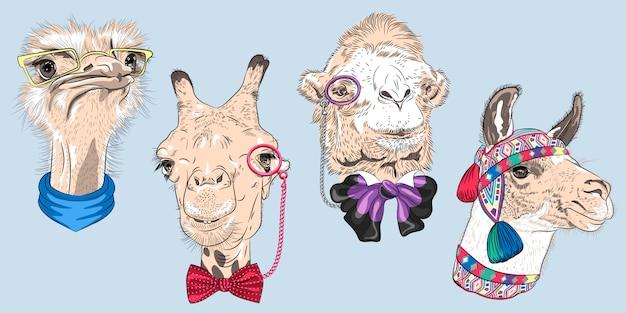 Définir des visages d'animaux drôles