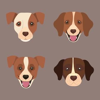 Définir les visages de chiens mignons