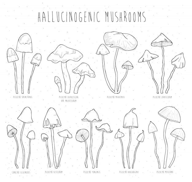 Définissez des champignons hallucinogènes.