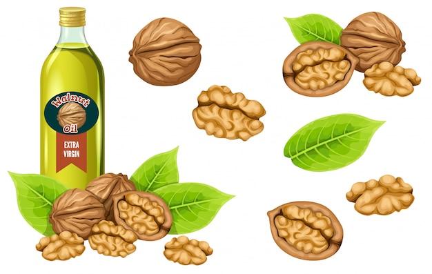 Définissez l'huile, la graine et la feuille de noix.
