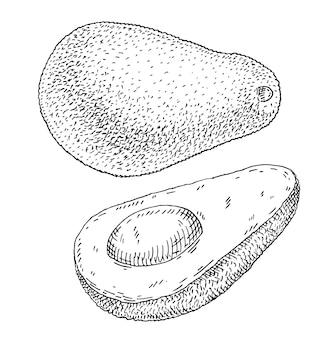 Demi avocat avec pépins. illustration vectorielle vintage à couver monochrome noir. isolé sur fond blanc. conception dessinée à la main