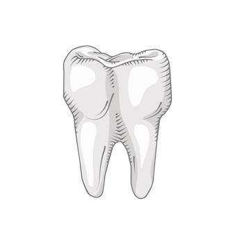 Dent isolée sur fond blanc. dentaire, médecine, concept santé