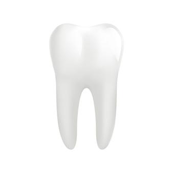 Dent molaire blanche isolée sur blanc