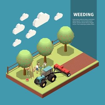 Désherbage de la composition isométrique avec les agriculteurs récoltant des pommes et le tracteur cultivant le sol autour des arbres du verger