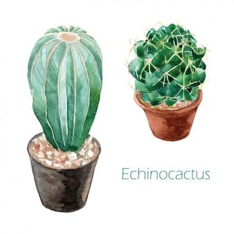Design aquarelle de cactus