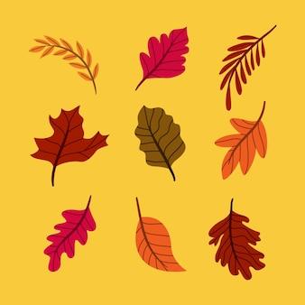 Design plat de collection de feuilles d'automne