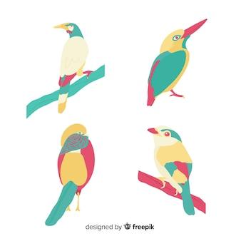 Design plat de collection d'oiseaux exotiques colorés