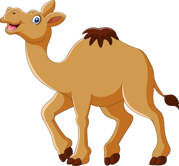 Dessin animé drôle de chameau sourire et debout
