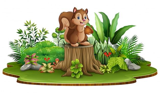 Dessin animé écureuil heureux tenant une pomme de pin et debout sur une souche d'arbre avec des plantes vertes