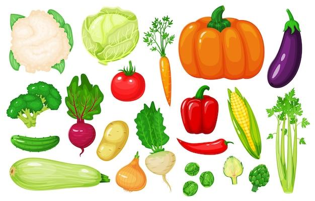 Dessin animé légumes carotte maïs poivre céleri chou-fleur brocoli betterave oignon concombre
