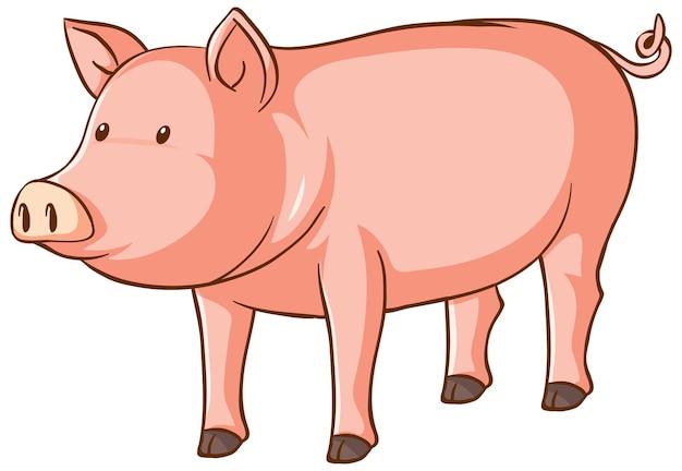 Un dessin animé mignon de cochon sur fond blanc