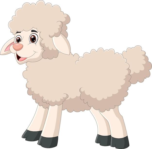 Dessin animé mignon mouton sur blanc