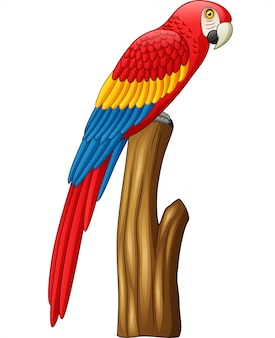 Dessin animé mignon oiseau ara