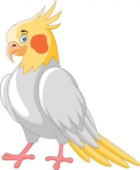 Dessin animé mignon un oiseau calopsitte