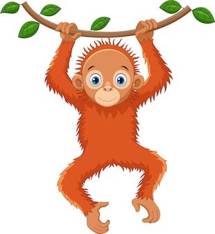 Dessin animé mignon orang-outan suspendu à une branche d'arbre