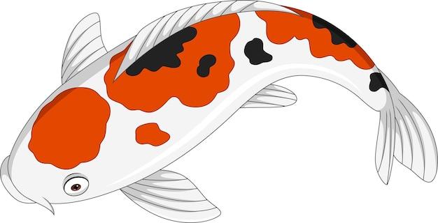 Dessin animé mignon poisson koi sur blanc