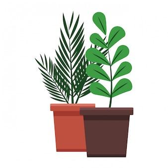 Dessin animé de plantes en pot