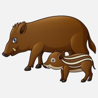 Dessin animé sanglier et cochon