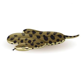 Dessin animé serpent anaconda sur blanc