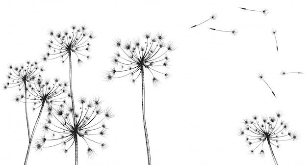 Dessin au trait de fleurs de pissenlit