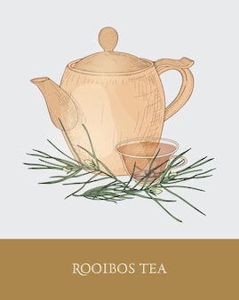 Dessin coloré de théière, tasse transparente avec infusion de thé rooibos, feuilles fraîches sur fond gris. infusion aux herbes aromatiques savoureuse. illustration dessinée à la main dans un style vintage pour tag, étiquette.