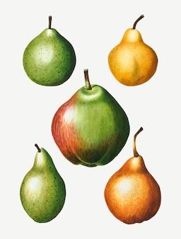 Dessin de fruit de poire vintage