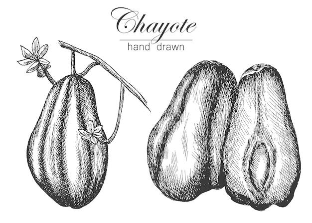 Dessin d'illustration vectorielle chayote dans des légumes de croquis de style dessinés à la main