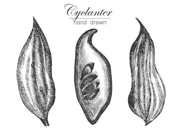 Dessin d'illustration vectorielle cyclanter dans des légumes de croquis de style dessinés à la main