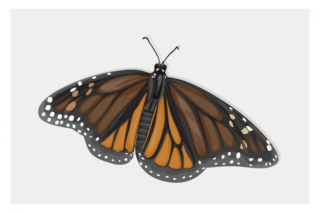 Dessin à la main papillon ailé brun