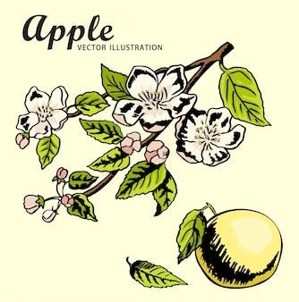 Dessin à la main des pommes sur une branche de pommier. croquis de dessin en couleur. printemps, nature, pommier en fleurs.