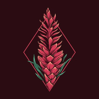 Dessin à la main vintage alpinia purpurata illustration
