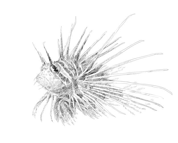 Dessin de poisson-lion sur fond blanc