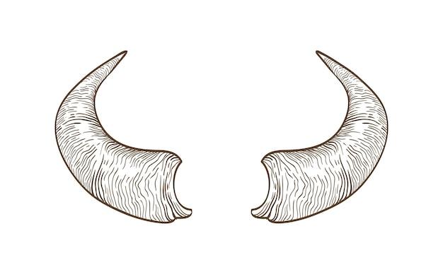 Dessin réaliste de cornes de vache, de taureau, de bison, de buffle ou d'autre bovin dessinés à la main avec des lignes de contour sur blanc