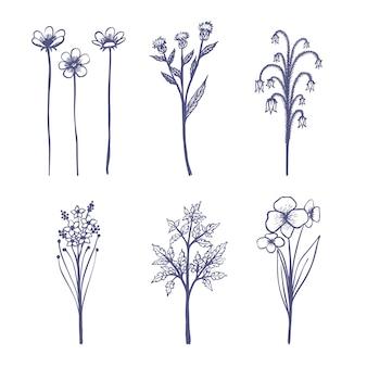 Dessin réaliste avec des herbes et des fleurs sauvages