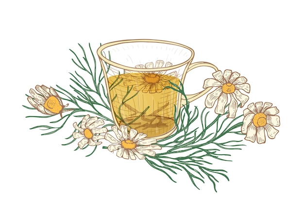 Dessin réaliste d'une tasse de thé, de fleurs de camomille et de feuilles isolées sur blanc