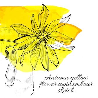 Dessin de topinambour de fleur jaune dessiné à la main
